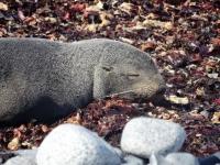 Sleeping Seal Antartica